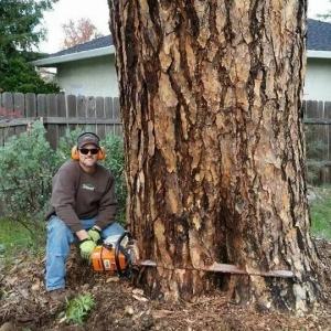 Large Pine Removal Redding
