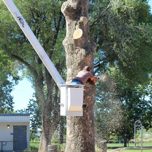 redding tree trimming company